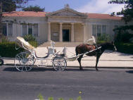 Horse and carriage for your wedding in Paphos (Pafos) Cyprus